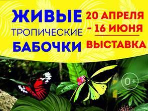 Выставка «Живые тропические бабочки»