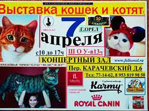 Выставка кошек «Усатый Доброволец»